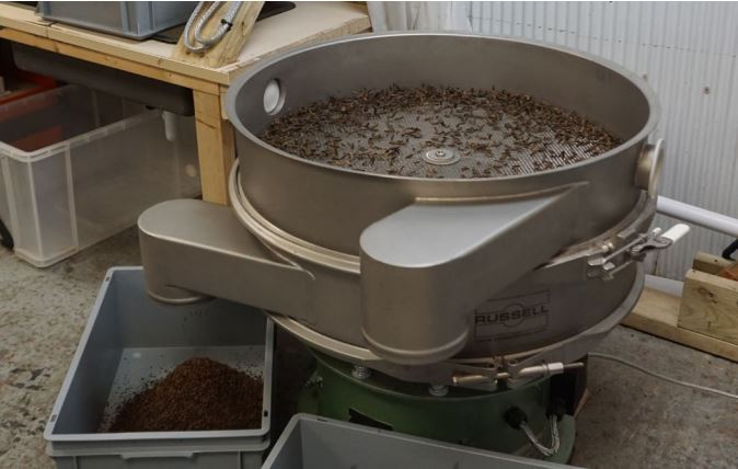 Automatyzacja procesu przesiewania muchówki Hermetia illucens (BSF)